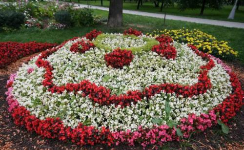 Низкорослые цветы на клумбе. Однолетники или многолетники — критерии выбора