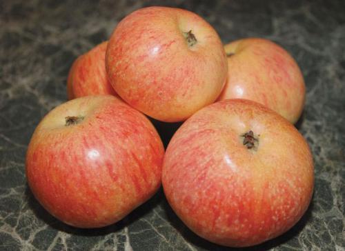 Сорт яблок конфетное. Описание Конфетной яблони