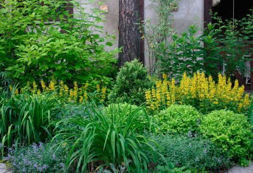 Цветы для тенистого участка. Характеристика тенелюбивых растений