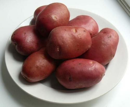 Сорт картофеля рокко. Описание и характеристика сорта