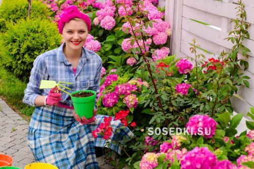 Садовая гортензия посадка и уход в открытом грунте лучшие сорта. Посадка гортензии весной в открытый грунт в Подмосковье