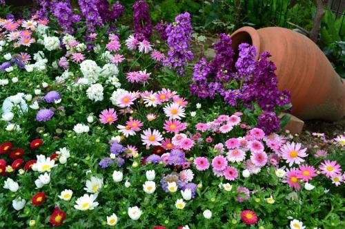 Цветы многолетники для сада неприхотливые долгоцветущие. Многолетние садовые цветы в ландшафтном дизайне