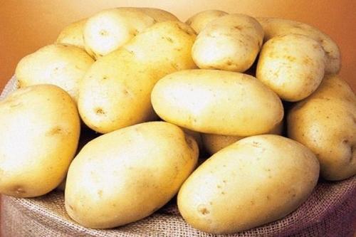 Сорт картофеля Королева анна. Картофель Королева Анна: описание и характеристика сорта