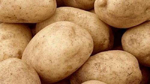 Тулеевский картофель характеристика. Популярный среди огородников среднепоздний сорт картофеля Тулеевский