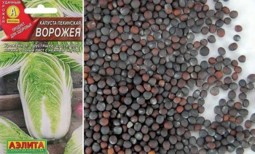 Технология выращивания капусты пекинской. Технология выращивания пекинской капусты