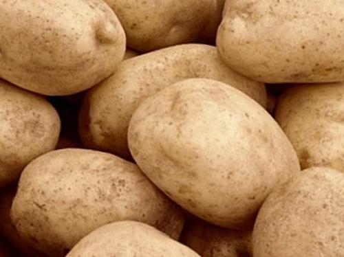 Тулеевский картофель. Картофель Тулеевский: описание сорта и характеристики с фото