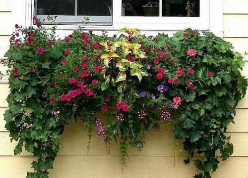 Какие цветы посадить в вазоны на даче, чтобы цвели все лето. Какие бывают цветы для выращивания в кашпо?