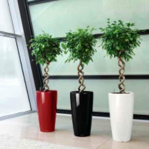 Тенелюбивые растения комнатные. Тенелюбивые комнатные растения