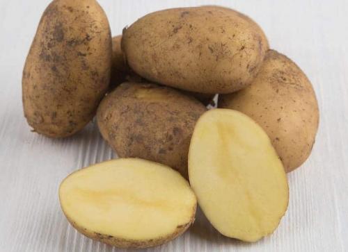 Картофель галла, что за сорт. Сорт картофеля Гала: сроки созревания и характеристика