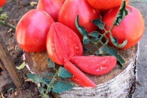 Томат буденовский малиновый. Томат Буденовка: описание сорта