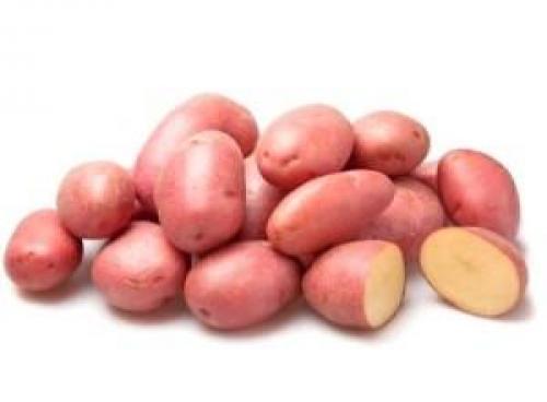 Сорт картофеля беллароза. Корнеплод