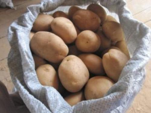Сорт картошки Удача описание сорта. Описание сорта картофеля Удача