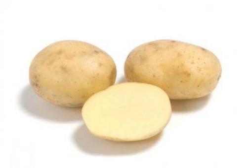 Картошка сорт Коломбо. Картофель Коломбо описание сорта