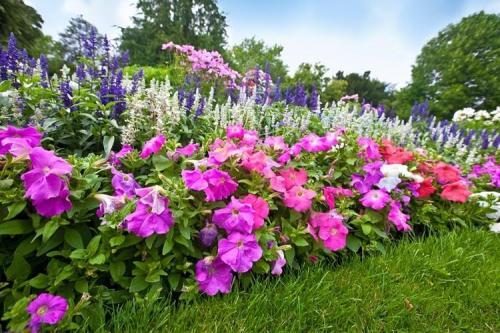 Каталог многолетних цветов. Многолетние цветы для дачи: фото с названиями (каталог)