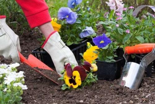 Многолетние цветы для сада низкорослые. Главные принципы ухода за низкорослыми цветущими растениями