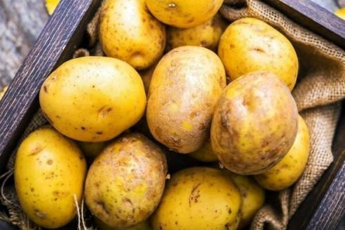 Сорта картофеля. Список лучших сортов картофеля по алфавиту